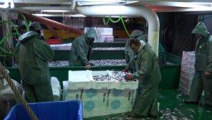 Türkiye'nin hamsileri Kırklareli'den