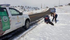 Yaralı köpeğin yardımına jandarma ekipleri yetişti