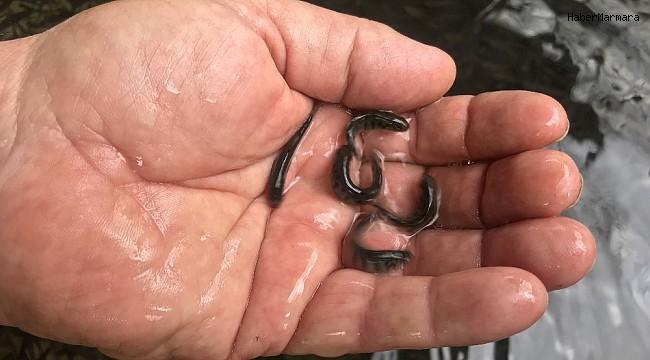 Alabalık üreticisi 700 anaç balıktan, 2 milyon yavru elde etti