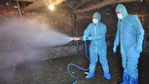 Hayvancılık işletmelerinde temizlik ve dezenfeksiyon çalışması