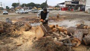 Turgutlu'da budanan ağaç dalları ihtiyaç sahiplerine yakacak oldu