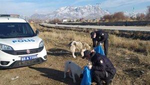 Van polisi sokak hayvanlarını kendi elleriyle besledi