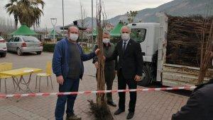 Vatandaşlara 3 bin adet hurma fidanı dağıtıldı