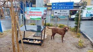 Dicle Kaymakamlığı, sokak hayvanları için beslenme noktası oluşturdu