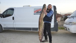 Gölhisar'da ender büyüklükte yakalanan yayın balığı görenleri hayrete düşürdü