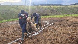 Gübre yığınına batan koyunu itfaiye kurtardı