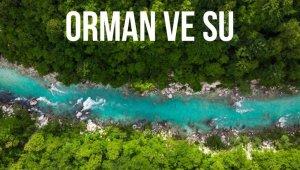 """TEMA Vakfı Başkanı Deniz Ataç, """"Ormanların tahrip edilmesi salgınları beraberinde getirdi"""""""