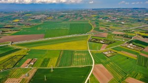 Altın sarısı Kanola tarlaları havadan görüntülendi