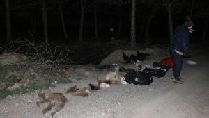 Başkent'te patilerine damar yolu açılmış şekilde 30'un üzerinde ölü köpek bulundu