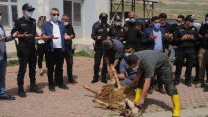 Cizre'de şehit polisler için kurban kesildi, mevlit okutuldu