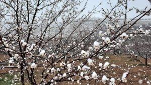 Kar yağışı kayısı üreticilerini endişelendiriyor