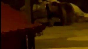 Kış uykusundan uyanan aç ayı Uzungöl merkezine indi