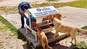 Kütahya Belediyesi sokak hayvanlarını yalnız bırakmadı