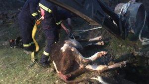 Kuyuya düşen ineği itfaiye ekipleri kurtarıldı
