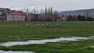 Leylekler göç yolunda Mahmut köyünde konakladı