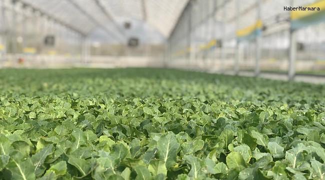Ordu'da organik üretim 17 yılda 19 kat arttı