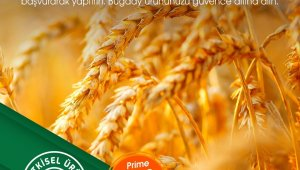 """TARSİM: """"Buğday ürününüz güvende"""""""