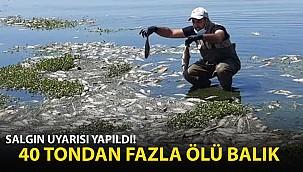 40 Ton Ölü Balık Sahile Vurdu! Salgın Uyarısı Yapıldı