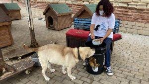 Hayvan barınağı yöneticisinin hesabını çaldılar, hayvanseverleri dolandırdılar
