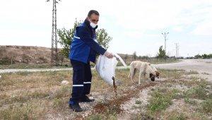 Konya'da sokak hayvanları tam kapanmada emin ellerde