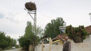 Leylek ailesi, Zeliha teyzeye 15 yıldır komşuluk yapıyor