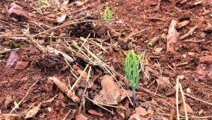 Ormanlarda çimleme çalışmaları başarıyla sonuçlandı