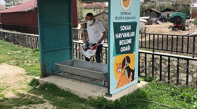 Vatandaşlar, evden çıkamayınca sokak hayvanlarını belediye ekipleri doyurdu