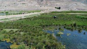 Erzincan'da sulak alanlar havadan ilaçlandı