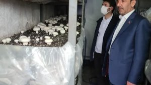 Kaymakam Cebeci ve Başkan Şahin mantar üretim tesisini ziyaret etti