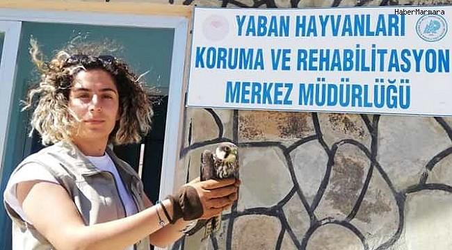 Yaralı kuşlar tedavi altına alındı