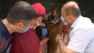 Aksaray'da hayvan pazarında denetim