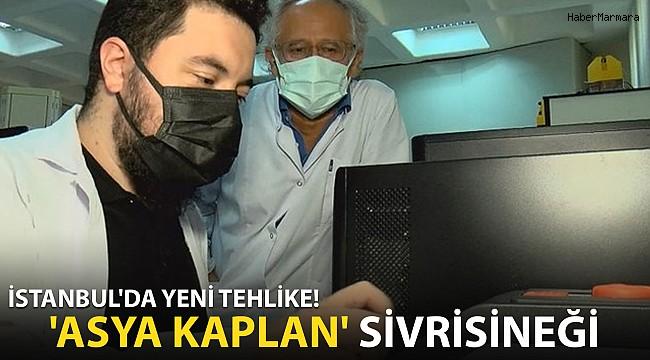 İstanbul'da Yeni Tehlike! 'Asya Kaplan' Sivrisineği