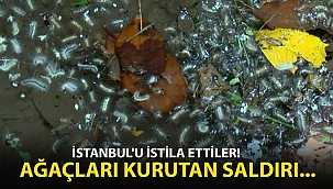 İstanbul'u İstila Ettiler! Mahalleli İsyan Etti...