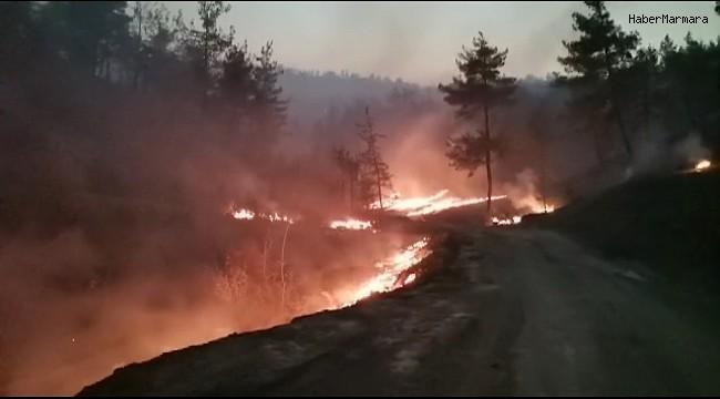 Kahramanmaraş'taki orman yangınında 25 hektar alan yandı