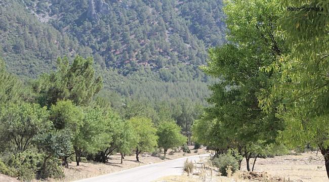 Badem ağaçlarının koruduğu ormanda 30 yıldır yangın çıkmadı