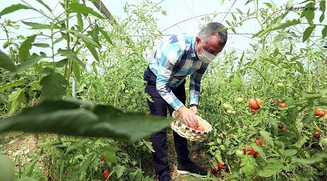 Bayraktar köyünde ilk hasadı Başkan Büyükakın yaptı