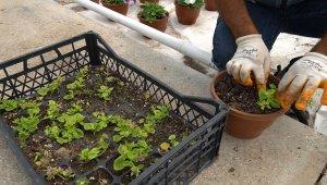Bitkiler özel bölümlerde yetiştiriliyor