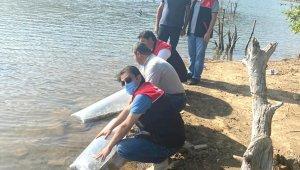 Erdek'te Yapıcı göletine sazan balığı salındı
