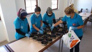 İhtiyaç sahibi ailelerin meyveleri Beypazarı Belediye Bahçesinden karşılanacak
