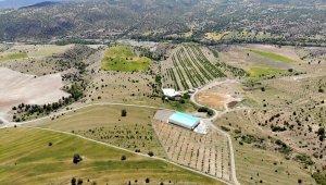 İstanbul'u terk eden işadamı, köyüne dönerek bin 300 dönümlük araziye 28 bin ceviz ağacı dikti