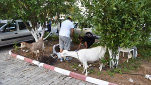 Kadıköy, yangından etkilenen tüm canlılar için seferber oldu