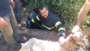 Kuyuya düşen keçiyi itfaiye ekipleri kurtardı