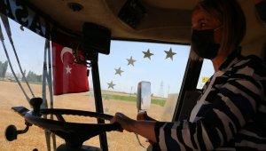 Nevşehir Valisi Becel, biçerdövere binerek hasat yaptı
