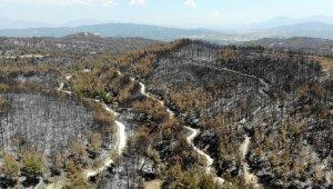 Osmaniye'de bin 500 hektar ormanlık alan küle döndü