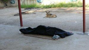 Sokak köpeği boğulan gencin başından ayrılmadı