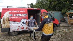 Erzincan'da 'hayvan ambulansı' hizmete girdi