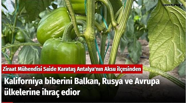 Kaliforniya biberini Balkan, Rusya ve Avrupa ülkelerine ihraç ediyor