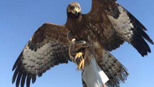 Van'da yaralı kuşlar tedavi altına alındı