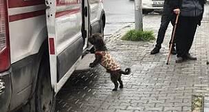 Sahibi börekçide bıçaklanan köpek, ambulansın başında böyle bekledi.