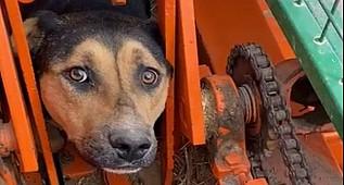 Tarım aracına sıkışan köpek tedavi altına alındı